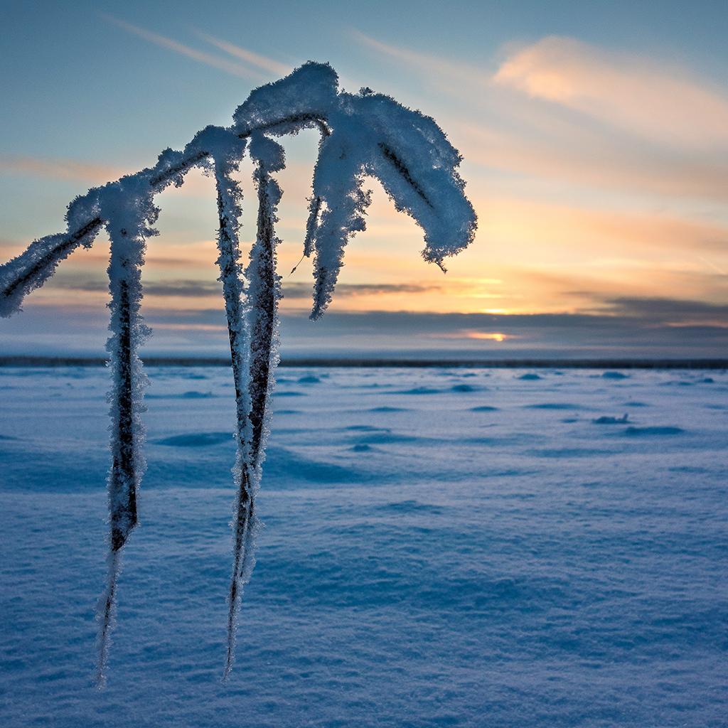 Kuva: Mika Kareinen. Talvinen järvimaisema aamuauringon noustessa.
